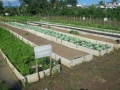 Plant a Family Vegetable Garden