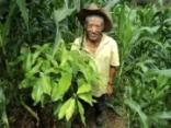 Inclusão económica e social da população indígena Tolupan