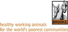 Oikos abre as portas na Nicarágua: organização inglesa pioneira em cuidados de saúde e bem-estar animal inicia atividades.