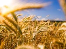 Novo website da Oikos totalmente dedicado às novas formas de acesso aos mercados agroalimentares