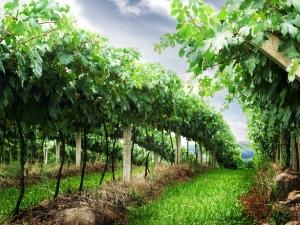 Um brinde aos produtores de vinho e aos municípios portugueses
