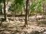 Resultados do projecto - Cadeias produtivas e gestão sustentável dos recursos naturais em Pespire