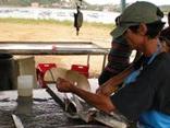Fortalecimento dos sectores pesca, camarão e concheiro