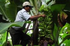 Projeto para a redução da pobreza no Peru é um exemplo de sucesso