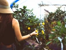 Curso de Agroempreendedorismo: tens o que é preciso? Lança-te!