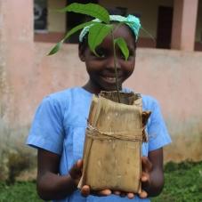 Viveiros comunitários e escolares para sensibilização e reflorestação do Parque Natural do Príncipe