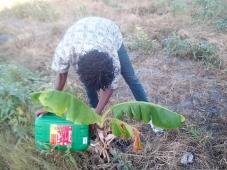 Antiga lixeira é recuperada em terreno agrícola com modelo agroflorestal sintrópico