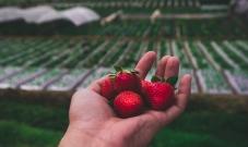 Recursos online disponibilizados pela Oikos sobre novas formas de acesso aos mercados agroalimentares