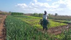 Oikos vai apoiar agricultores, pescadores e negócios locais afetados pela COVID-19 em Moçambique