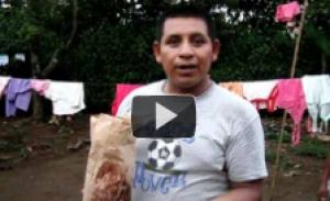 Fortalecimento de sistemas alimentários rurais sustentáveis e equitativos na Guatemala